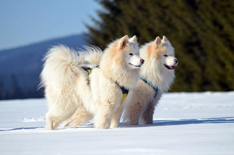 Álmoskönyv: fehér kutya jelentése