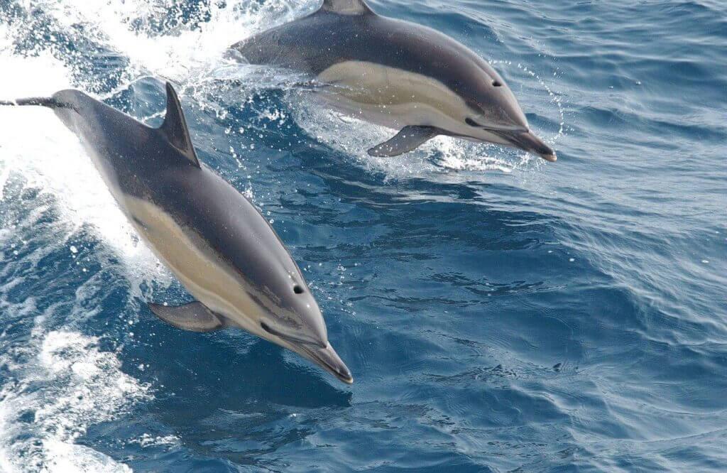 Delfinnel álmodni, mit jelent?