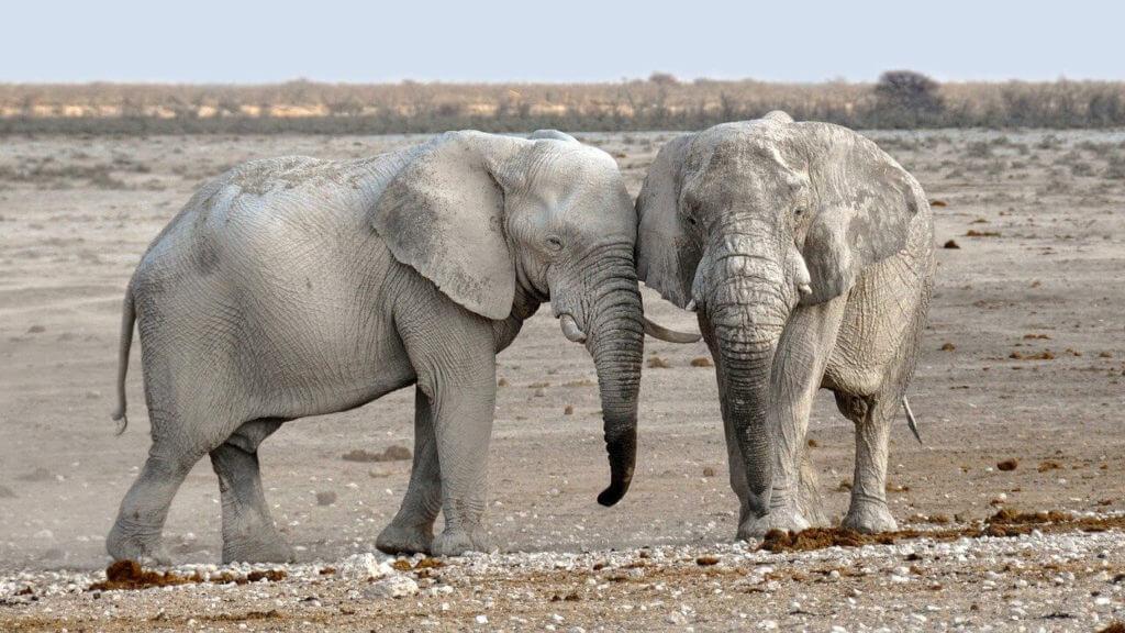 Elefánttal álmodni, mit jelent?