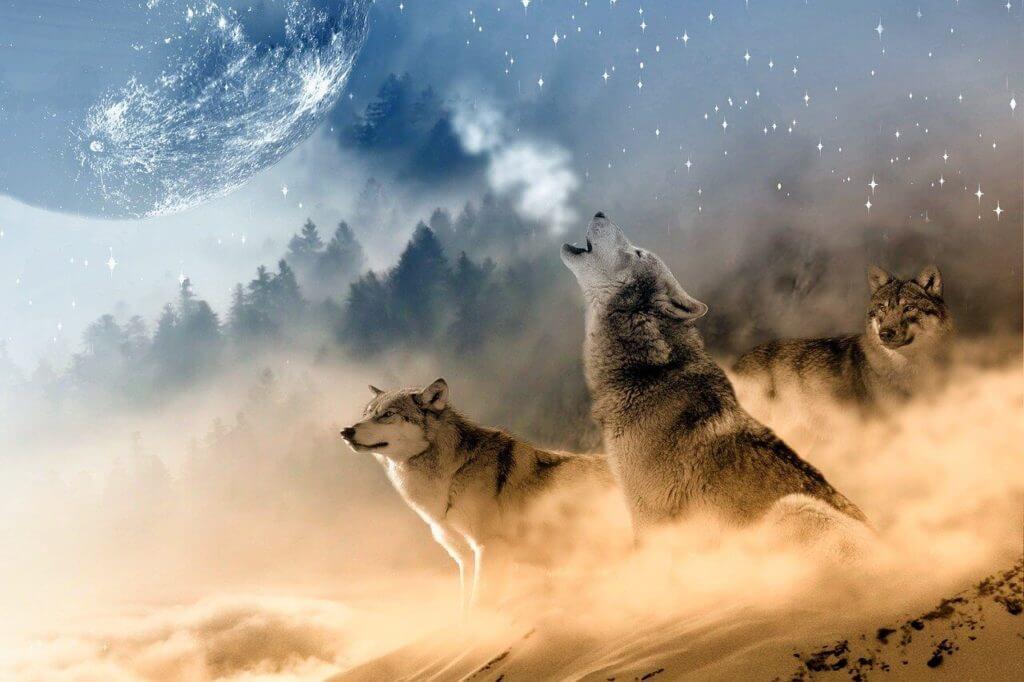 Farkasokkal álmodni, mit jelent?