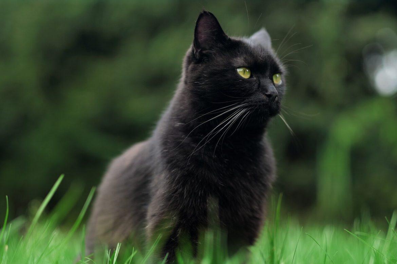 Macskával álmodni