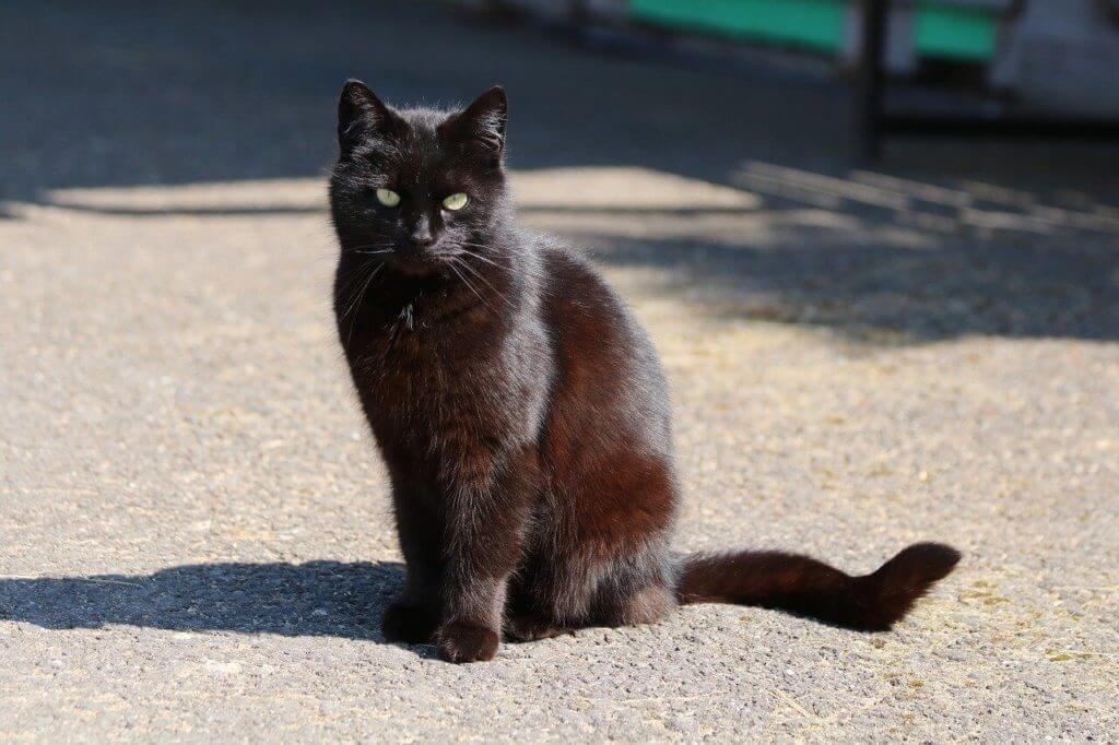 Fekete macskával álmodni, mit jelent?