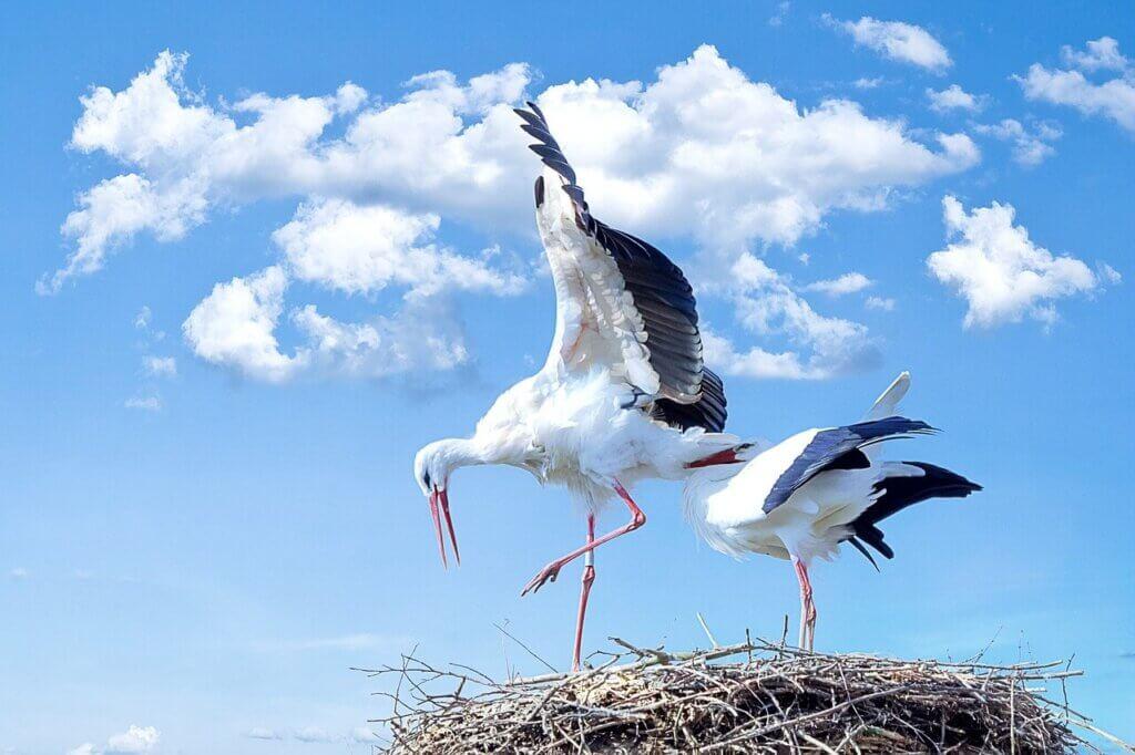 A gólya szerepe álmainkban