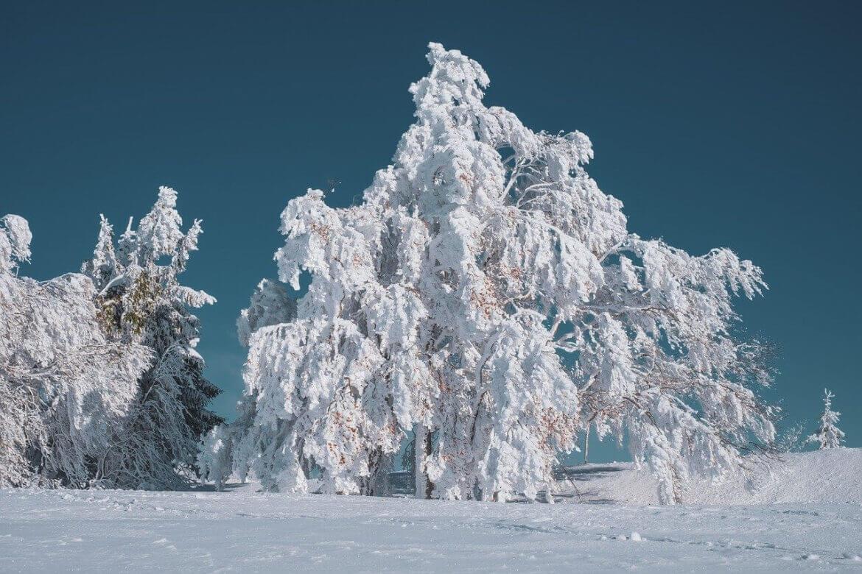 Hóval álmodni mit jelent?