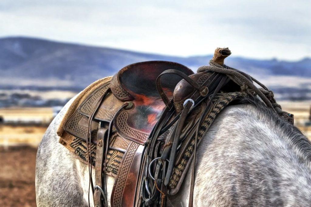 Lóval álmodni, mit jelent?