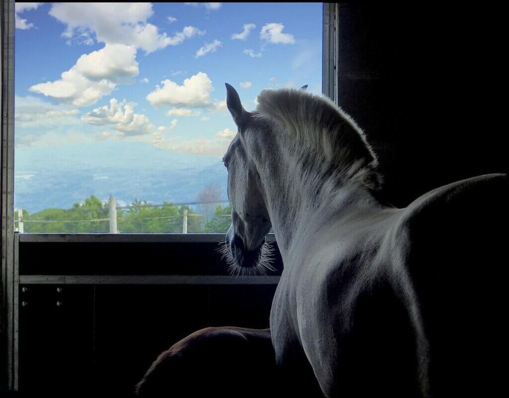 Lóval álmodni mit jelent?