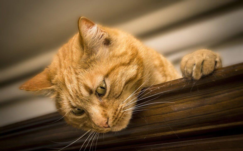 Macskával álmodni: mit jelent?