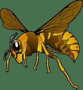 Méhekkel álmodni