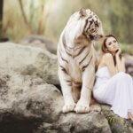 Tigris álomfejtés, mit jelent?